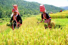 Sapa- Vietnam