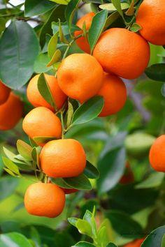 Fruit Plants, Fruit Garden, Fruit Trees, Fruit And Veg, Fruits And Vegetables, Fresh Fruit, Fruits Photos, Home Grown Vegetables, Fruit Decorations