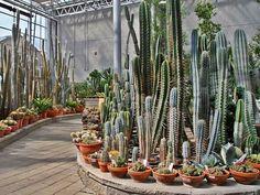 Far North cactus garden  Preciosisimos columnares