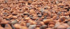 Cocoa Market Update as of April, 2014 on World Cocoa Foundation's website