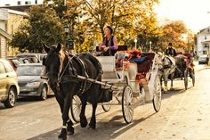 A horse and carriage ride around  Cape May is fun in the fall and autumn! Cape May Point, Ocean City, Jersey Cape, Cape May County, New Jersey