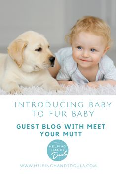 Congratulations on welcoming home baby! Are you ready for your human baby and fur baby to meet for the first time? Human Babies, Fur Babies, Welcome Home Baby, Helping Hands, Doula, Congratulations, Meet