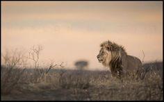 Another beautiful shot by Marlon du Toit of Singita- Sabi Sands