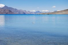 What a beautiful shot of the Nubra Valley, with a rather proud bird paddling along very happy with herself! Isn't the blue water of the river absolutely magical!