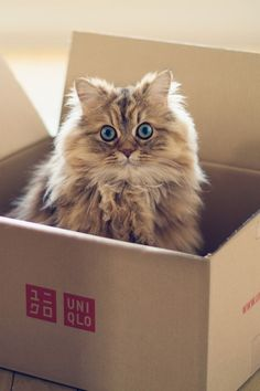 Another cat in a box.