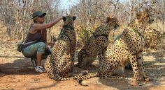 z- Mangini Adalberto & Laura - Cheetahs, II