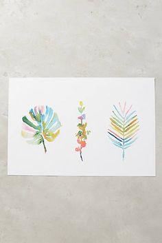 Succulent Spectrum Print - Anthropology