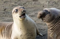 2017 Winners :: Comedy Wildlife Photography Awards - Conservation through Competition