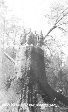 Men standing on spruce tree stump near Toledo, Oregon. Trees of this size and old growth forests in general are not with us anymore ~ Photo from the Gerald W. Williams collection.