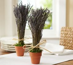 "Dried Lavender in Clay Pot #potterybarn Sheaf: 12"" high Clay Pot: 4"" diameter, 3.5"" high Accented with a hand-tied raffia bow; comes in a terra-cotta pot with green Spanish moss. Lavender is grown in Northern California."