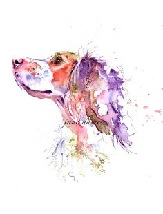 Working cocker spaniel in watercolour, by artist Jane Davies. Available  to purchase as a limited edition print.