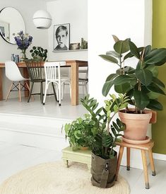 my scandinavian home: A Dutch home gets a green make-over #diningarea #twiggy #plants #roundmirror