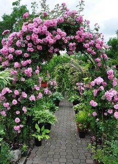 Rose Arbor by corpsef - Modern Garden Bulbs, Garden Planters, Shade Garden, Fruit Garden, Garden Arbor, Garden Landscaping, Beautiful Roses, Beautiful Gardens, Rose Arbor