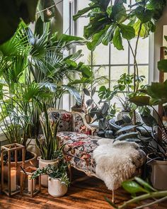 "room crush wednesday / we asked ""plantfluencer"" to share some of his favorite modern planter ideas to cultivate your indoor jungle, and his picks did not disappoint. bonus: they're all on sale through may link in bio 🌿🌱🌿🌱 Living Room Modern, Living Room Designs, Living Spaces, Living Rooms, Diy Zimmer, Budget Home Decorating, Cozy Nook, Indoor Outdoor Living, Indoor Garden"