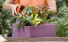 Veja o passo a passo para criar uma horta caseira de ervas aromáticas e orgânicas!