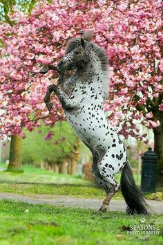All People from the World are Welcome in Our Community lovely ✿ Horses 💙🌐👑🐎✿💕 Horses And Dogs, Cute Horses, Horse Love, Most Beautiful Horses, All The Pretty Horses, Animals Beautiful, Cute Baby Animals, Animals And Pets, Majestic Horse