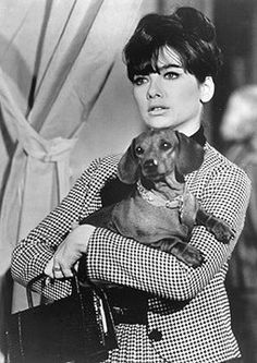 """Suzanne Pleshette holds one of the stars of Walt Disney's """"The Ugly Dachshund"""" (not the one pictured!) © 1966 The Walt Disney Company"""