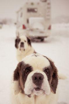 A journey on snow. by Yoshihiro Kishida / 500px