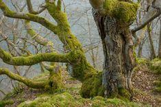 Nationalpark Kellerwald-Edersee, Hessen. Foto: Matthias Schickhofer; Brandstätter