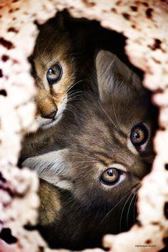 Peeking out.