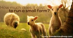 So you're looking to start a small farm. That's great! Here's how we do it, in terms of finances and cost.