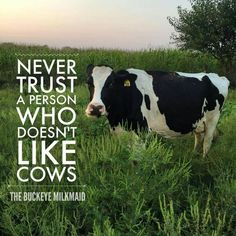 Dairy cows quotes horses 70 New Ideas Cow Quotes, Animal Quotes, Farm Quotes, Farm Sayings, Wise Quotes, Vegan Animals, Farm Animals, Cute Animals, Country Girl Life