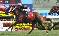 Able Friend (AUS) 2009 Ch.g. (Shamardal (USA)-Ponte Piccolo (NZ) by Volksraad (GB) 1st Stewards' Cup (HK-G1,1600mT,Sha Tin), The Queen's Silver Jubilee Cup (HK-G1,1400mT,Sha Tin), Chairman's Trophy (HK-G2,1600mT,Sha Tin), The Champion's Mile (HK-G1,1600mT,Sha Tin), The Premier Bowl (HK-G2,1200mT,Sha Tin) (photo: HKJC)