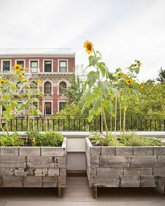 Rooftop of Ali Cayne's West Village Townhouse