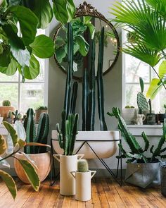43 Luxury Indoor Plants Ideas For Living Room To Make Your Home More Fresh - Indoor planters allow us to not only enjoy the beauty of plants and flowers inside our homes, but they also add to the existing décor and with the man. Living Room Plants, Room With Plants, Interior Design Living Room, House Plants, Living Room Decor, Plant Rooms, Planting Succulents, Planting Flowers, Succulent Plants