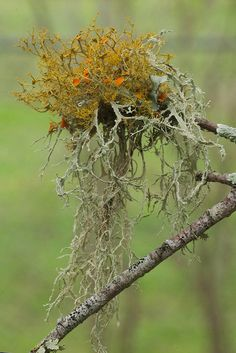 lovely lichen by Jim McCulloch on Flickr