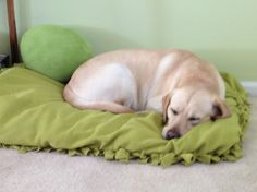 No-Sew Dog Bed! *I used an old pillow and fleece blanket no one ever used... the dog loves his new bed*