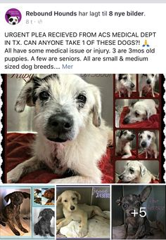 6/15/17 URGENT PLEA! PLEASE SHARE AND TRY TO HELP! /ij