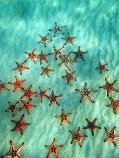 The Nicest Pictures: Starfish