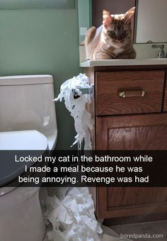 Funny Animal Pictures Of The Day 24 Pics Hilarious Animal Memes That Will Make Your Day So Much Better 23 Funny Animals Of The Day Funny Animal Memes, Cute Funny Animals, Funny Cute, Cute Cats, Crazy Funny, Hilarious Pictures, Animal Humor, Funny Kitties, Funny Memes