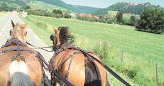 Decouvrir Jura avec attelage chateau de Lavigny pres de Lons le saunier Jura France