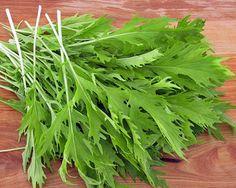 Salade Asia salade Mizuna Early Graines