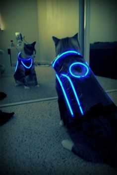 Tron cat suit! I told Alex I needed to pin a pic of a cat today to complete my collection, since I've already pinned some cupcakes. This geeked-up feline will do! It does not look happy... There will be bloodshed...