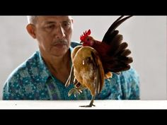 Serama : Chicken Junkie : Everything You Need To Know About Chickens
