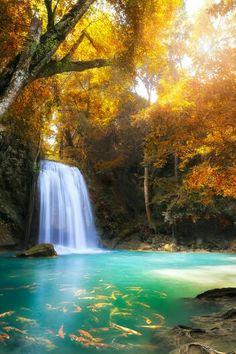 Dream forest kanchanburi