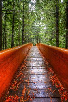 Photograph Larry Hamill Redwood Bridge on One Eyeland
