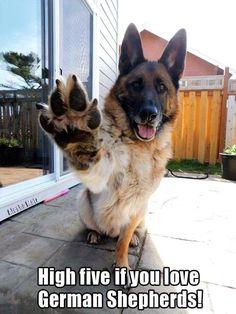 Woop Woop! Lol