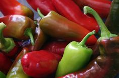 Growing Peppers from Seed - Dog Island Farm