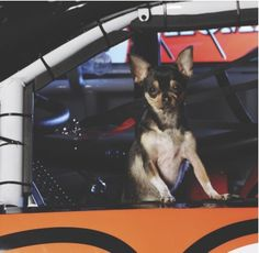 Meet NASCAR's Tony Stewart's puppy love, Kayle! She loves life in the fast lane!