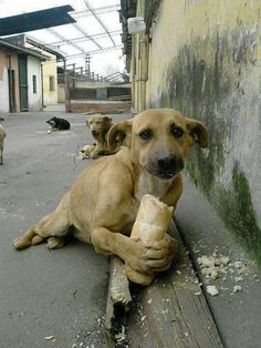 Just look at this stray's face, looking at the wonderful person who gave them bread to eat