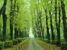 Oprijlaan landgoed, Verhildersum in Leens, Groningen, the Netherlands