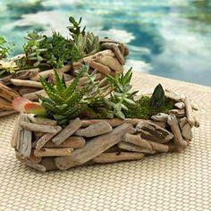 Driftwood pots