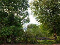 #romania #landscape #countrylife #fagaras Country Life, Romania, Landscape, Places, Scenery, Country Living, Corner Landscaping, Lugares, Res Life
