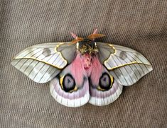 Not an animal but a moth with boobs is definitely worth sharing. Beautiful Creatures, Animals Beautiful, Cute Animals, Beautiful Bugs, Beautiful Butterflies, Io Moth, Cute Moth, Gato Animal, Moth Tattoo