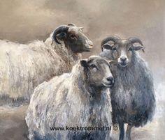 3 schapen