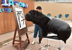 "Fourteen year-old male sea lion 'Leo' attends a calligraphy training session to paint the character for ""Rooster"" at the Hakkeijima Sea Paradise aquarium in Yokohama, suburban Tokyo on December 26, 2016. The event marks the upcoming Lunar ""Year of..."